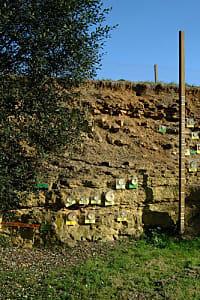 Réserve naturelle de Toarcien