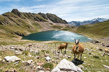 Actualité : Tracé gps Tour du lac d'Oncet par le col de Sencours