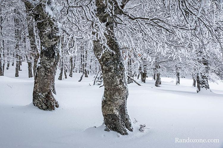 Randonnée dans la neige sur le plateau de l'Aubrac
