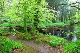 Balade dans la forêt de Huelgoat