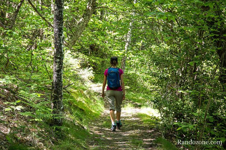 Nous marchons dans la forêt