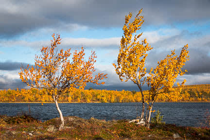 Actualité : Randonnée au lac Vuolip Njáhkajavri en Suède