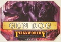 Teignworthy Gun Dog