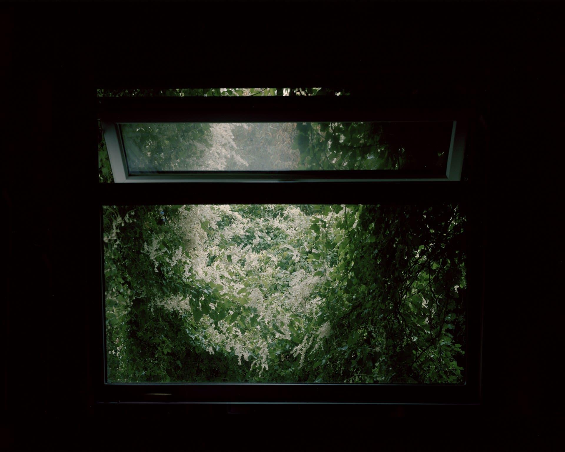 The Window of My Studio, 2018