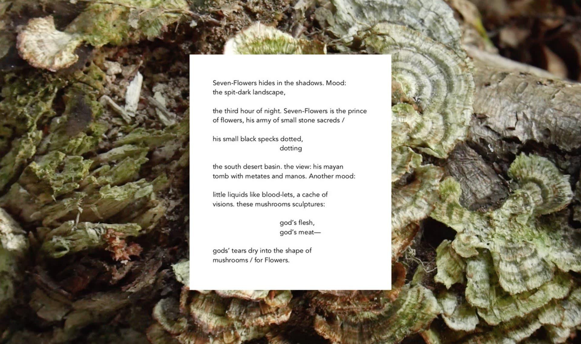 Extract: Seven-Flowers, Nina Hanz