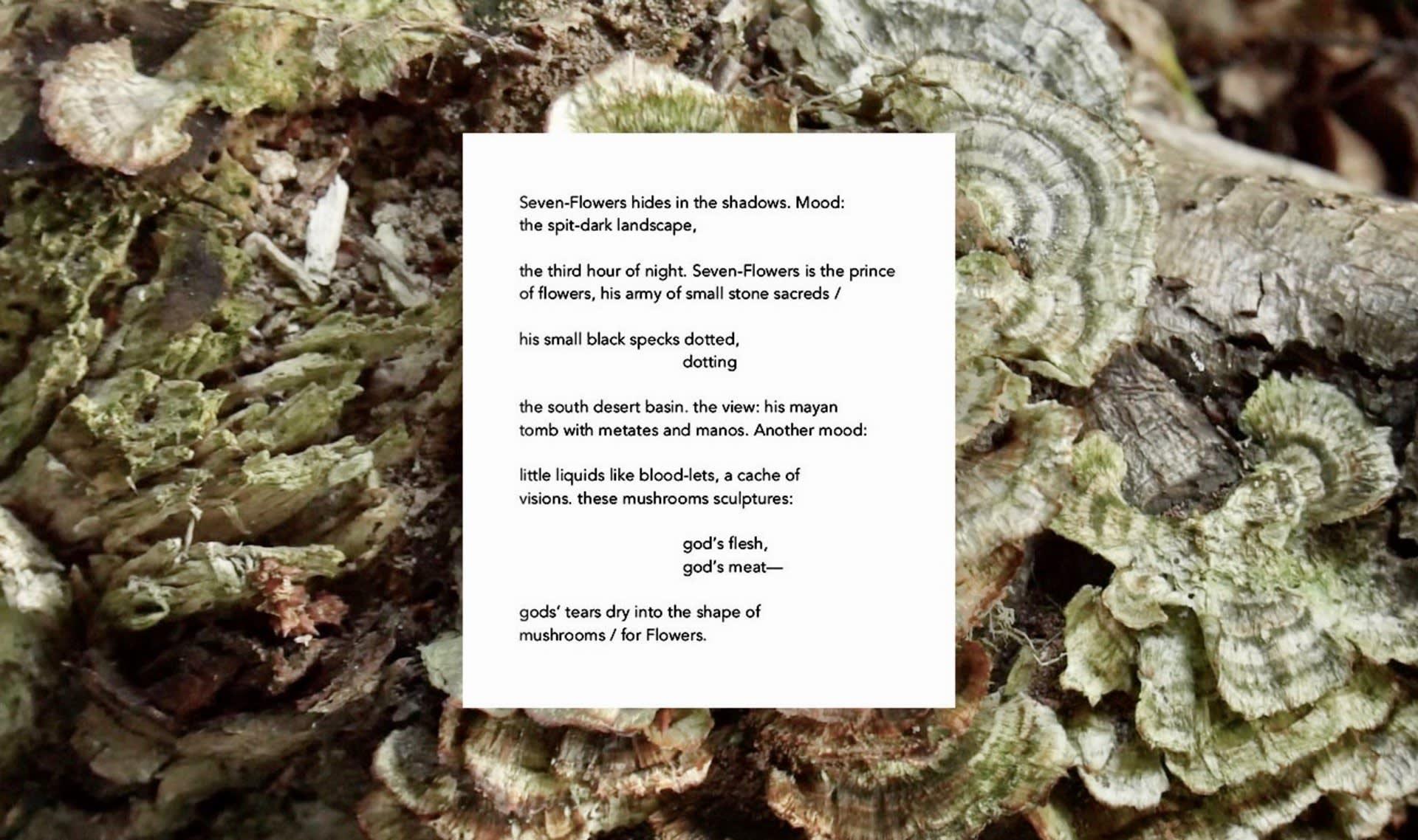 Seven-Flowers, Nina Hanz, 2020