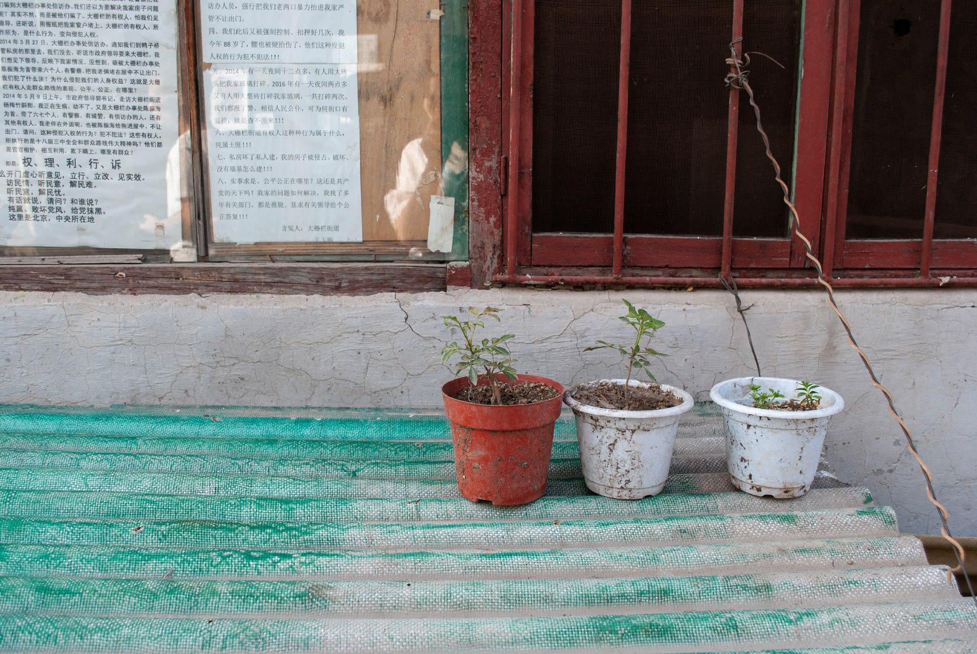 Pot-plant Enthusiasts