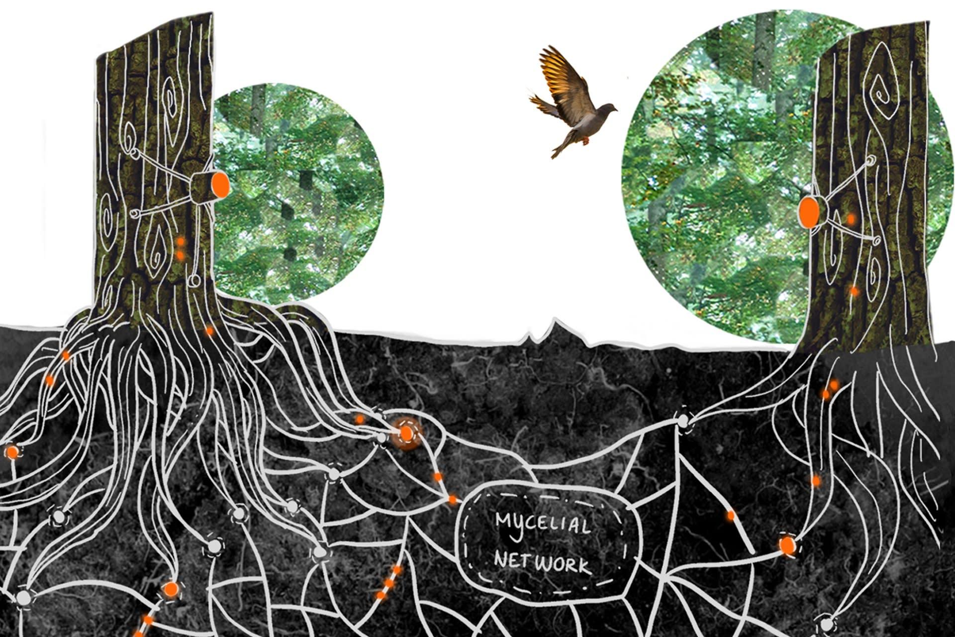 Science | Mycelial Network