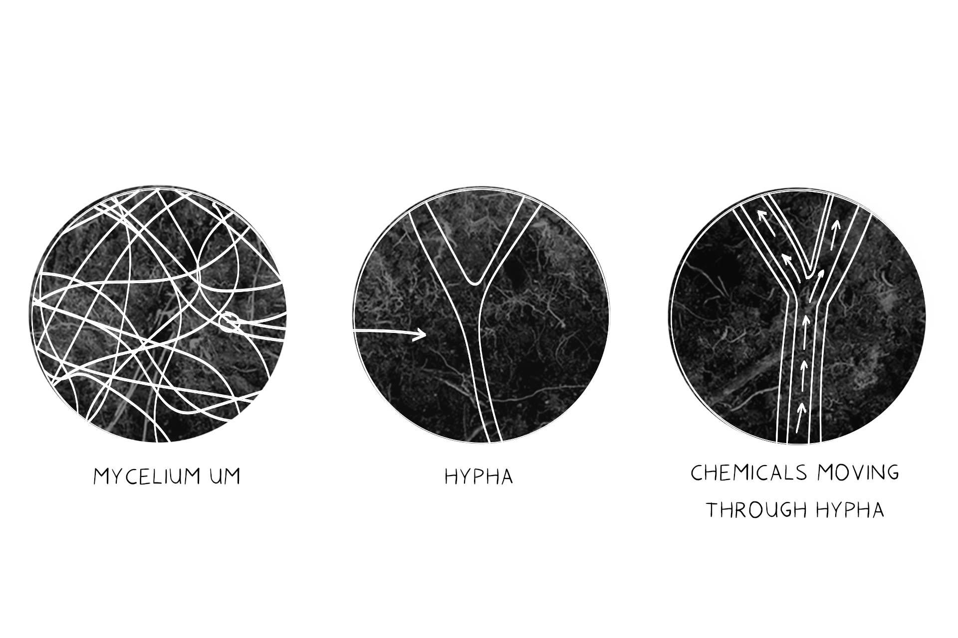 Science | Hypha