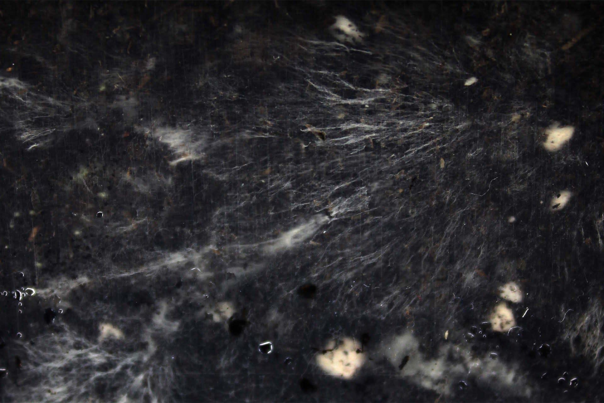 Experiment | Mycelium