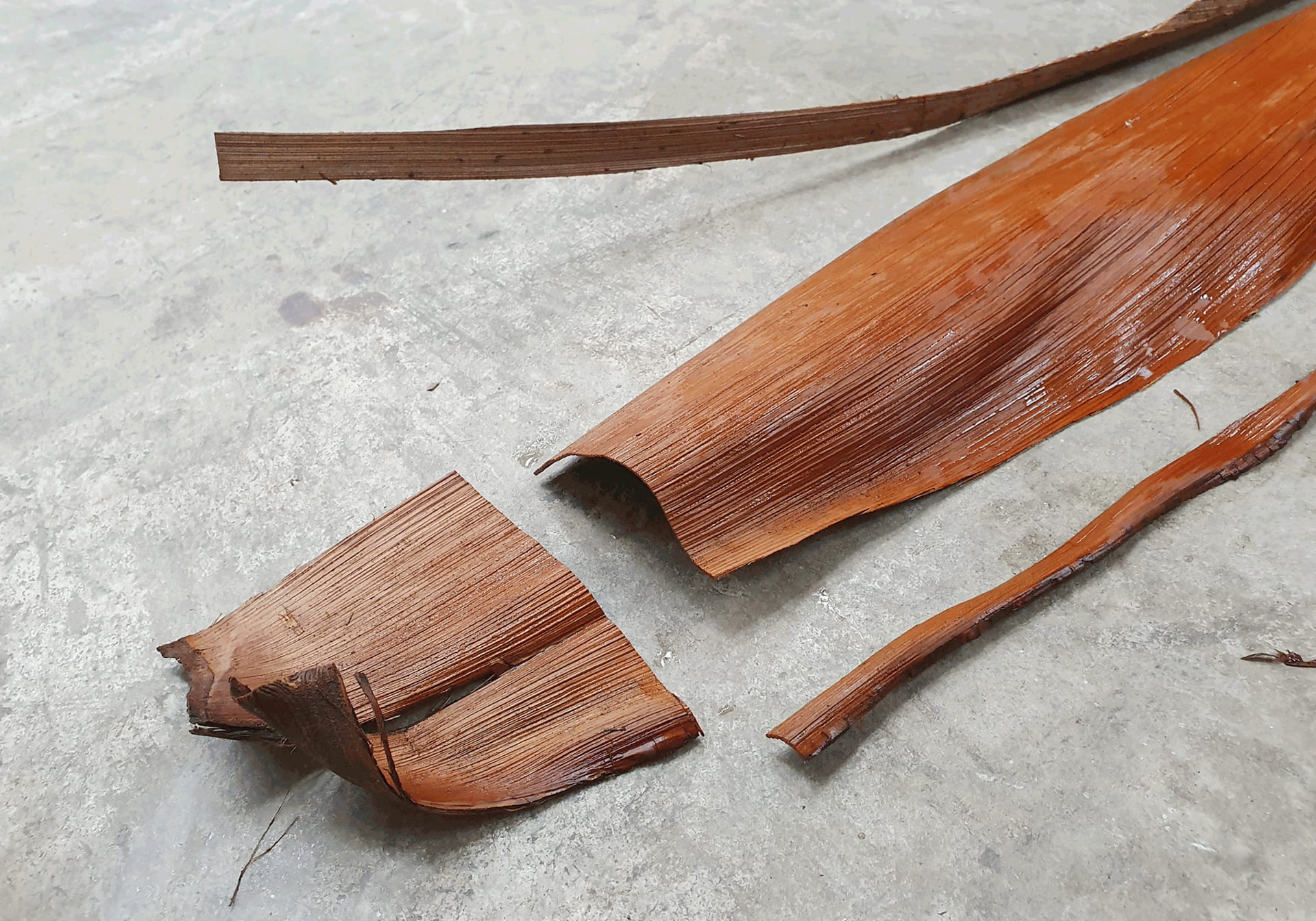 Fillet palm leaf sheath