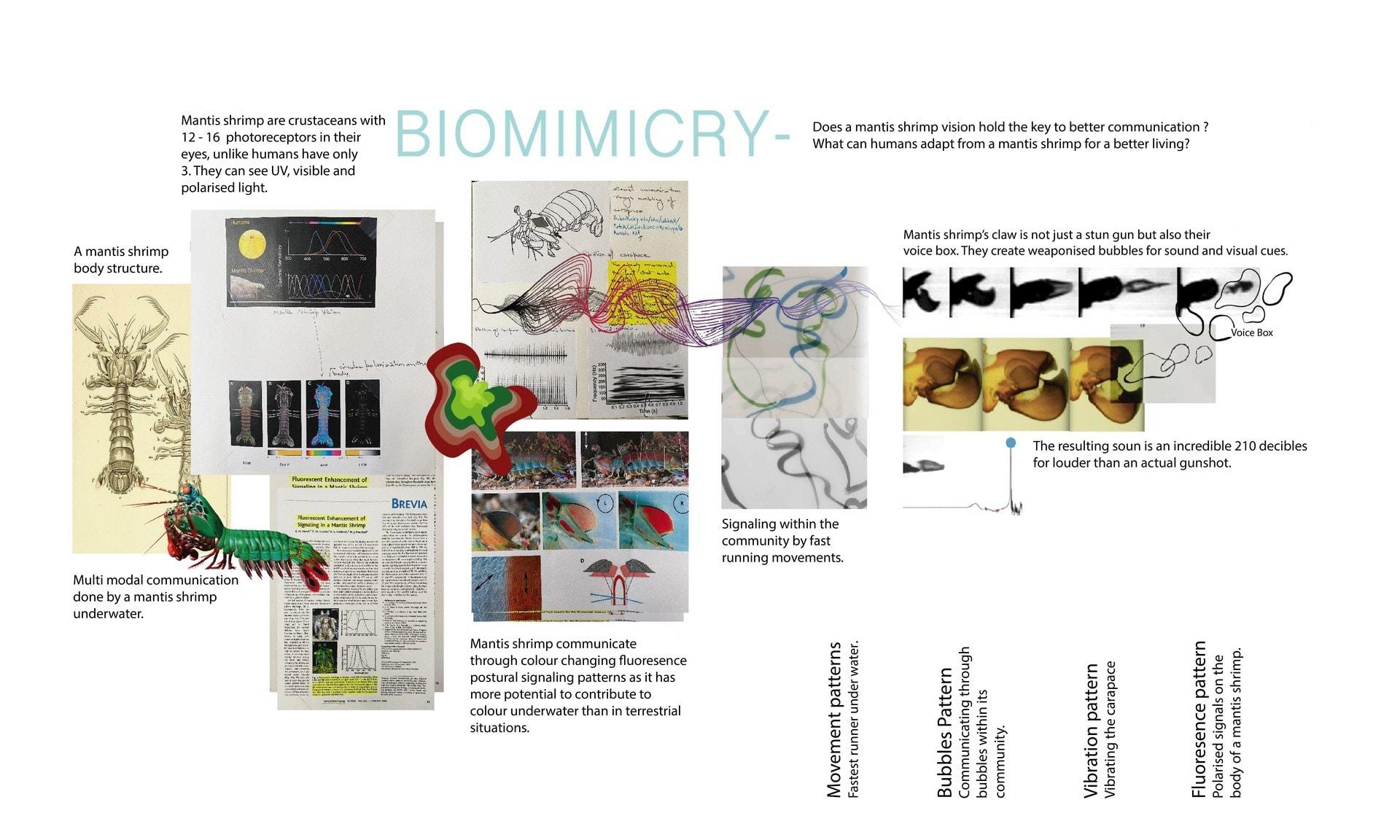 Biomimicry of a Mantis shrimp