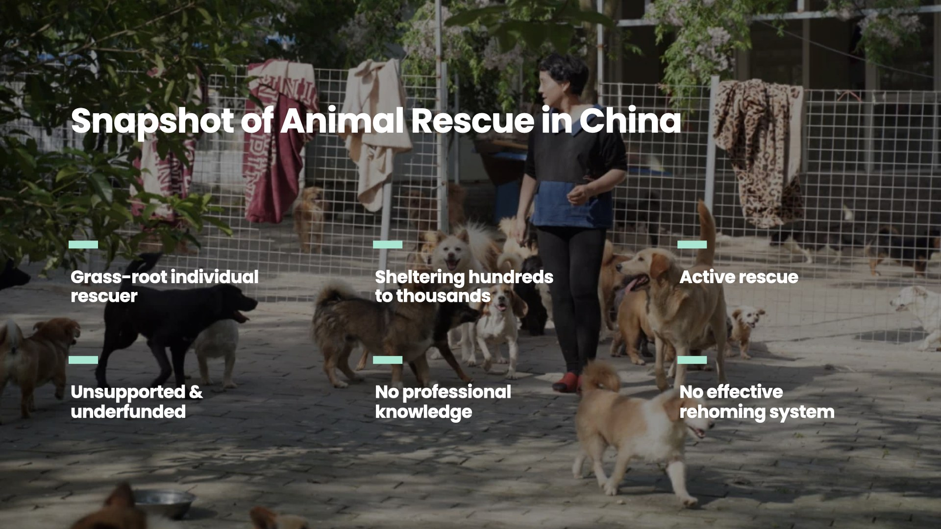 A snapshot of animal rescue in China
