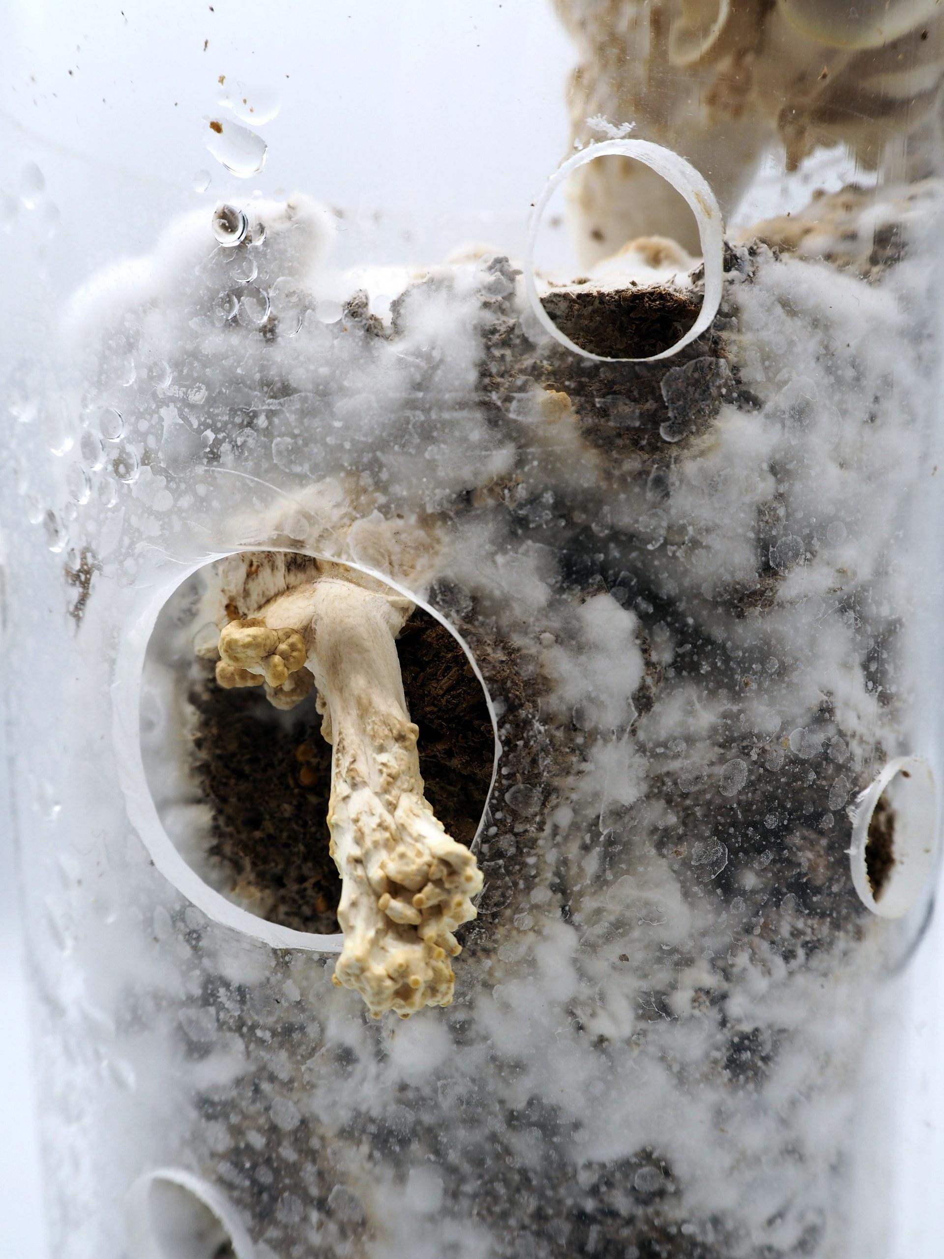 mycelium / 4