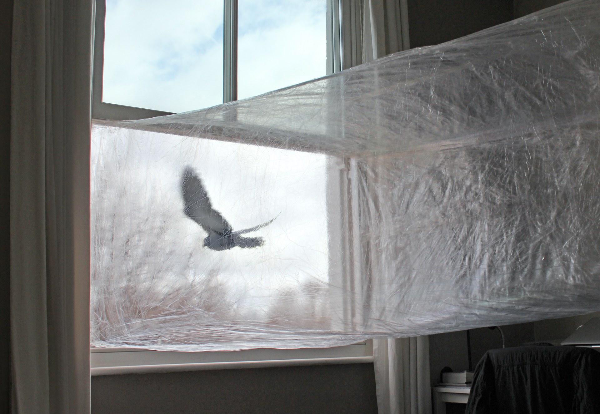 pigeon | 07:28 pm, 23 April | bridge II