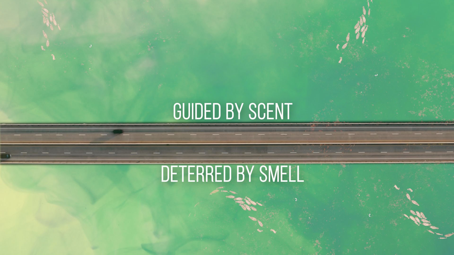 Guided by scent, deterred by smell