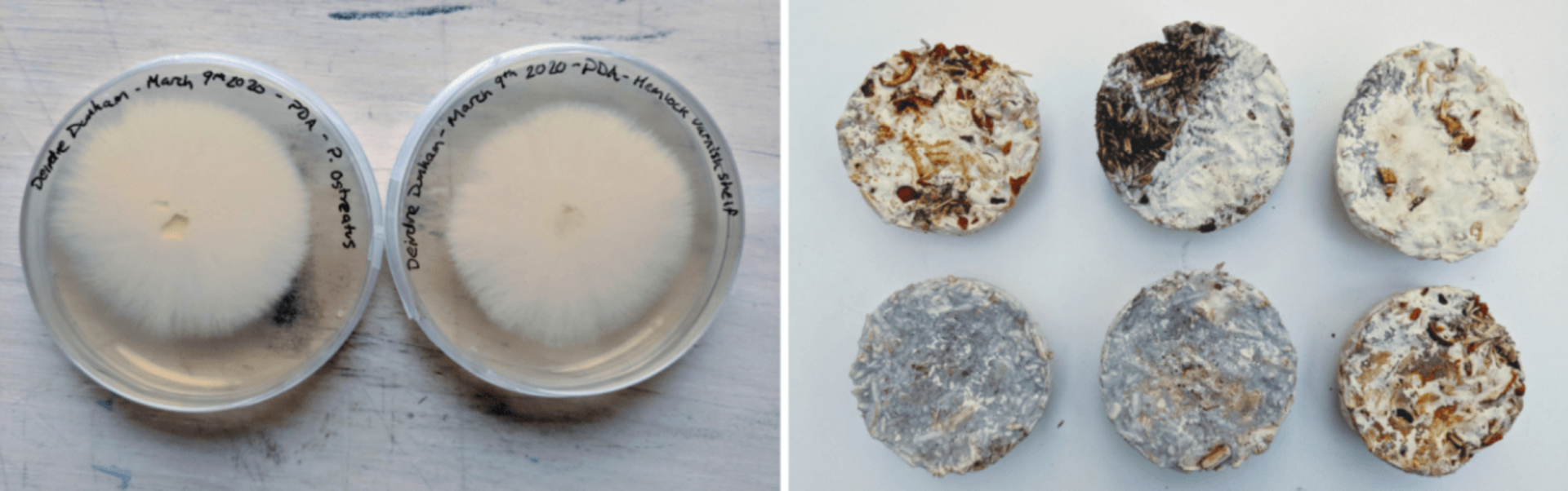 Mycelium growth and samples - finished samples contain citrus peels and coffee grounds