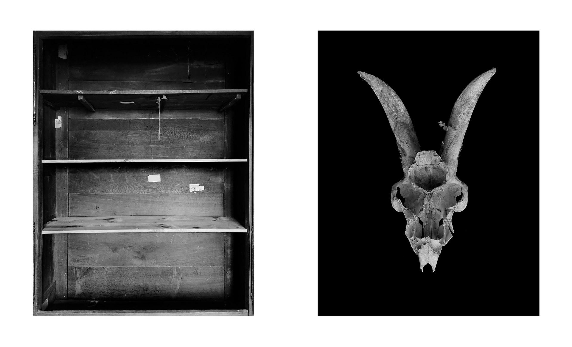Shelves, 2021 + Skull, 2021
