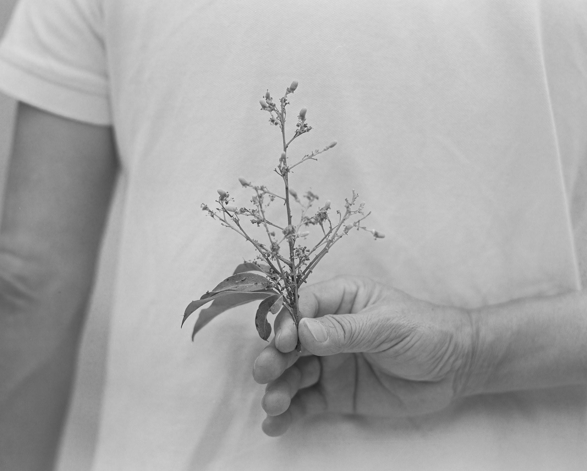 Lychee flower#2, 2021