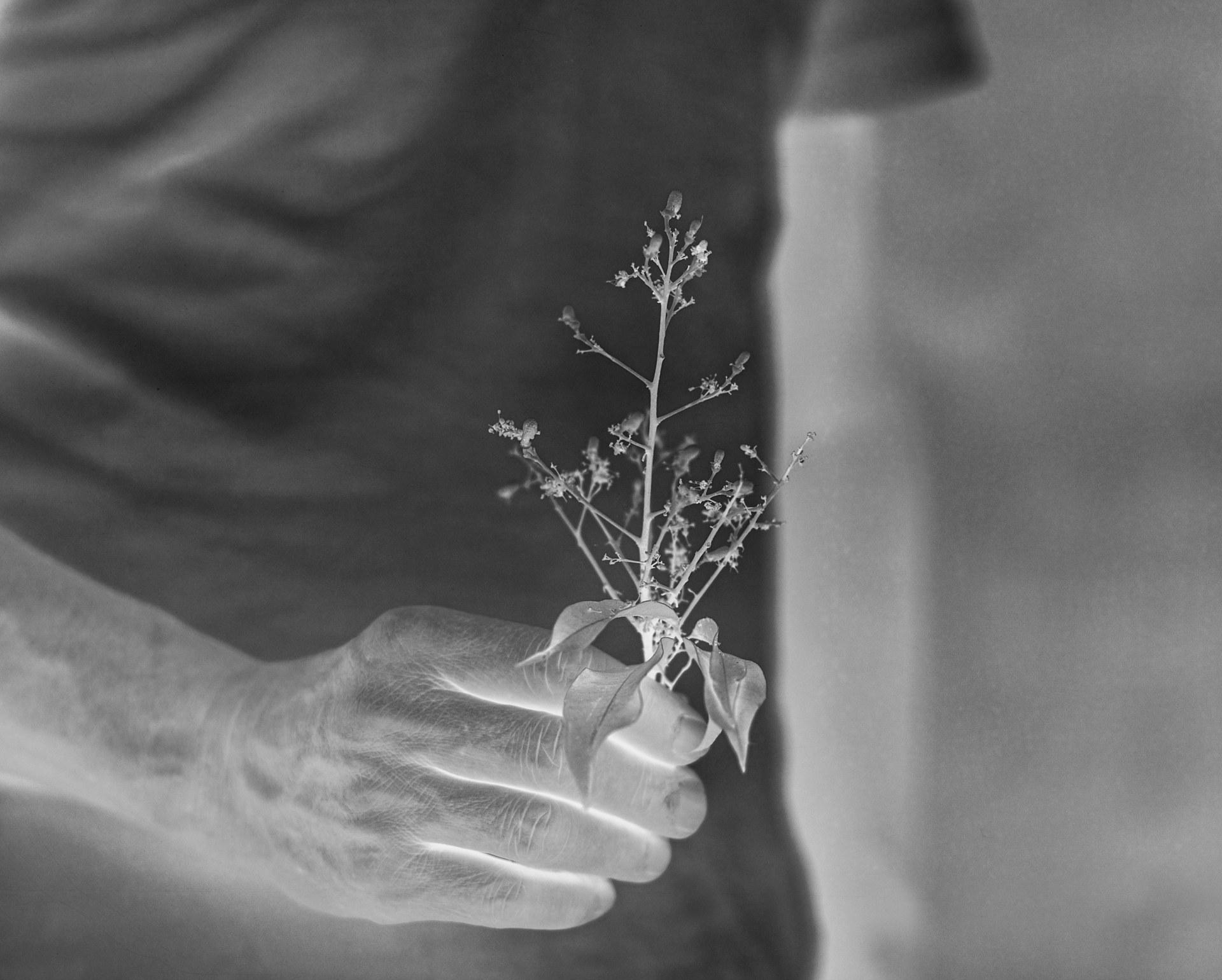 Lychee flower#1, 2021