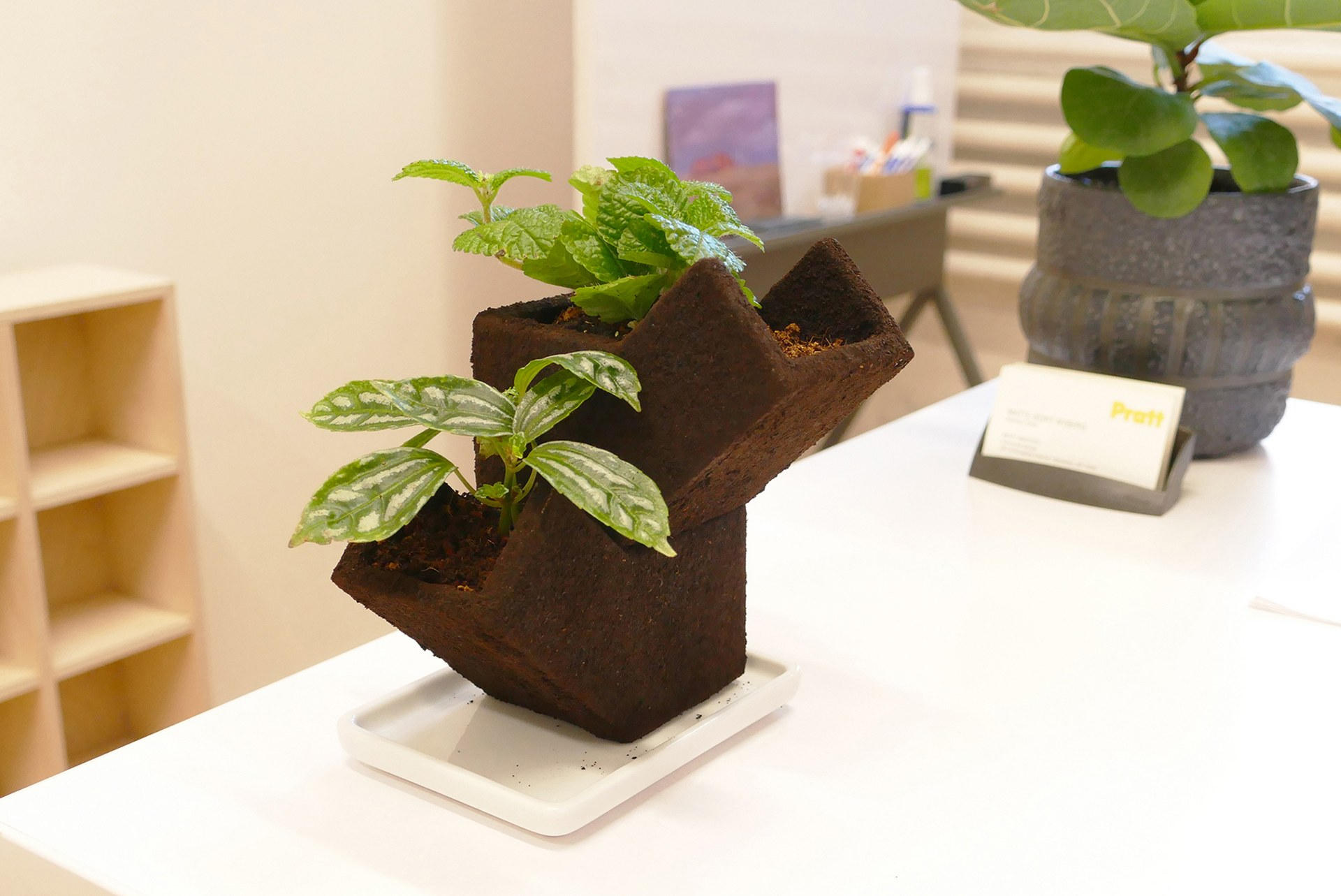 +POT can also fertilize your plants, remove odours and dehumidify areas.