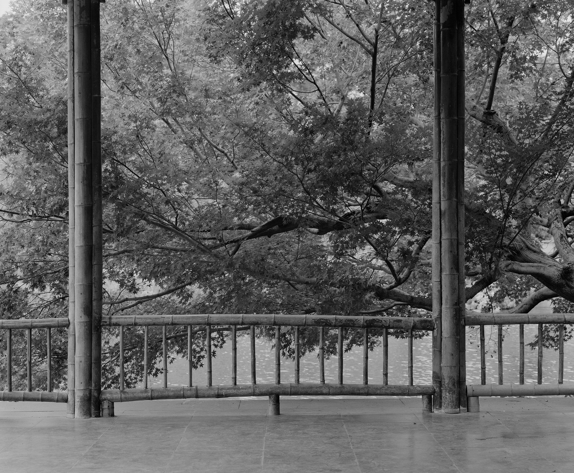 Two eternals, pergola and the maple tree., 2020.