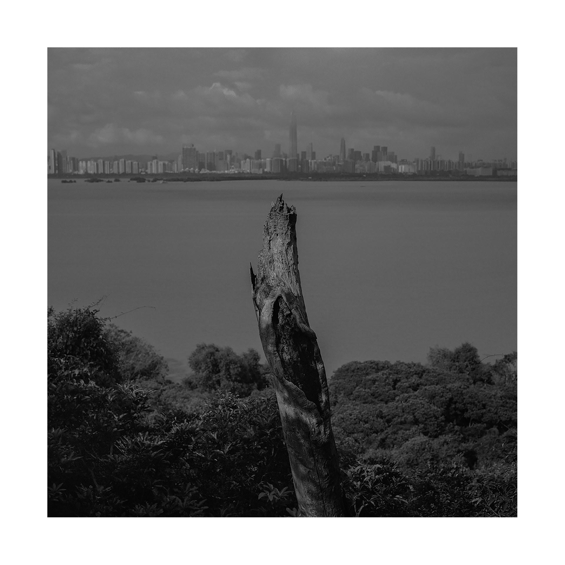 Dead tree beside Hong Kong wetland, 2020