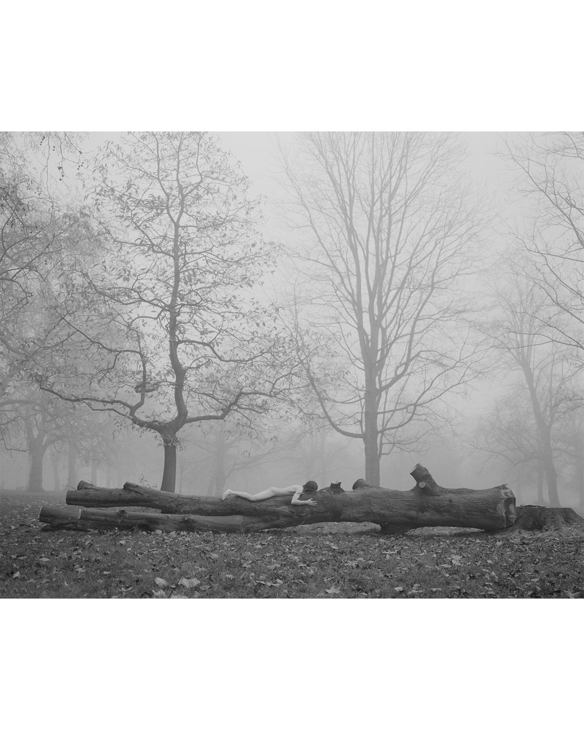 Lay on A Wood in Hyde Park ↑