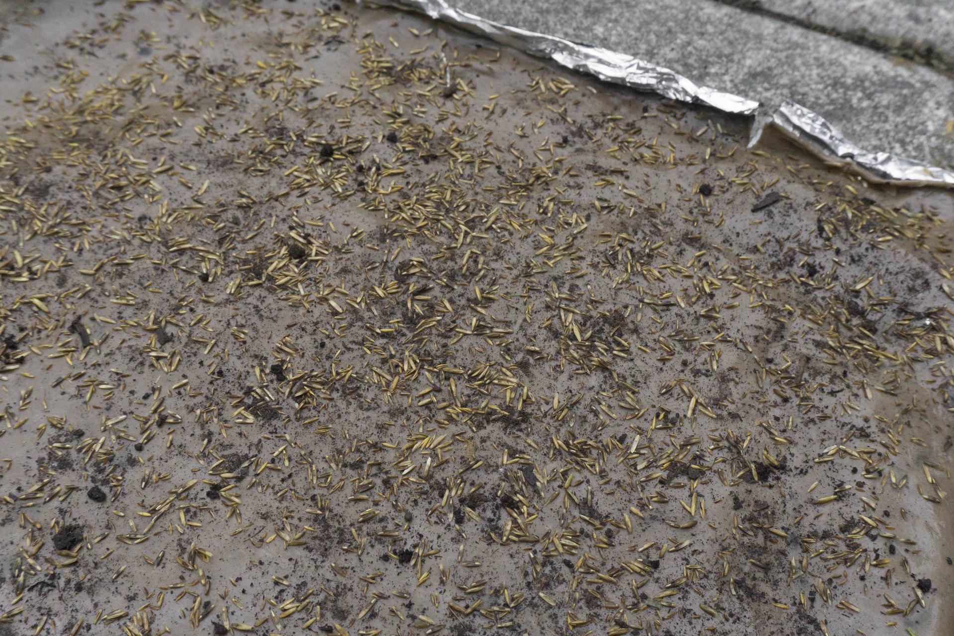 seeds, pieces of ground