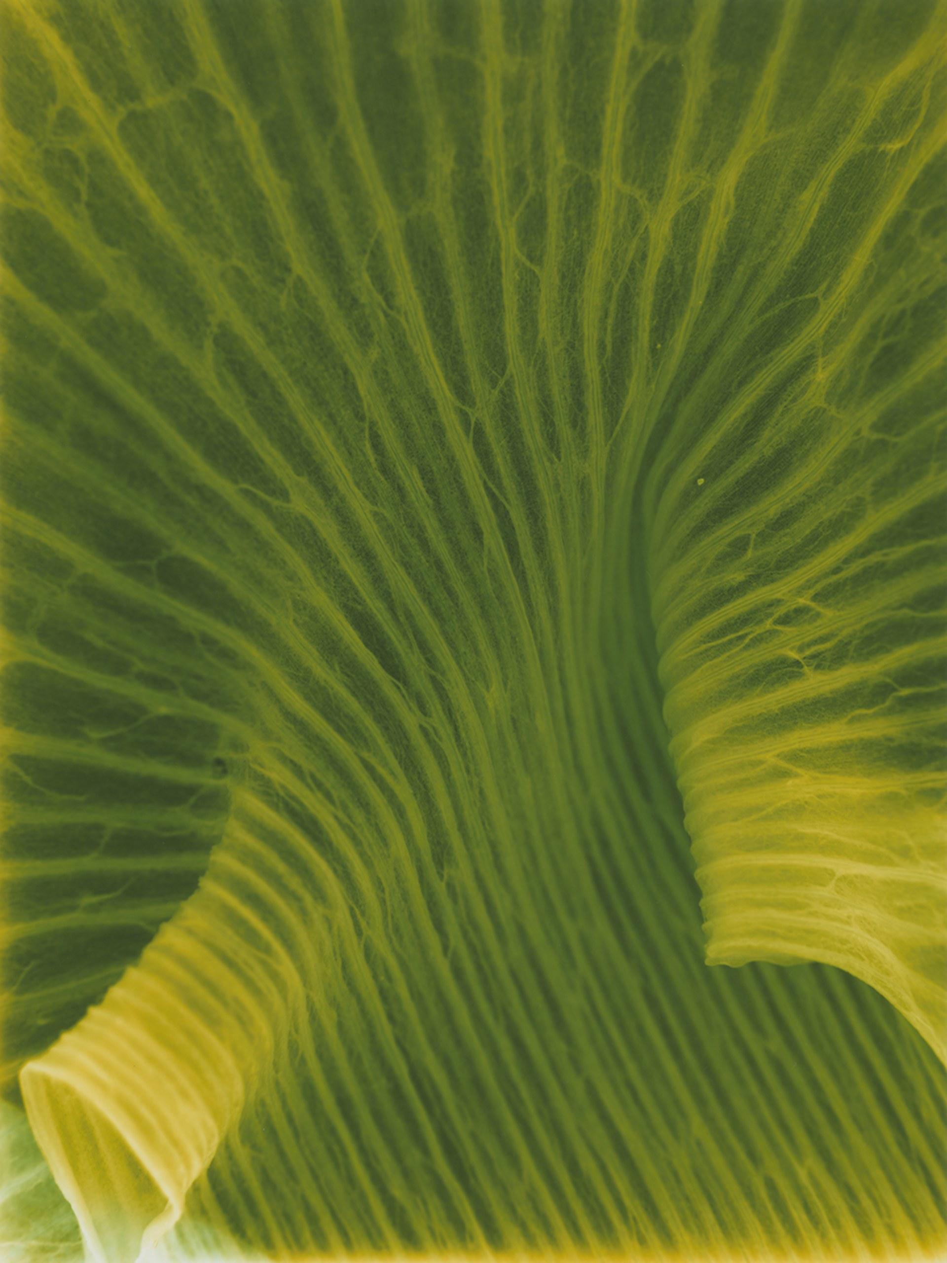 PhotoSynthesis VII