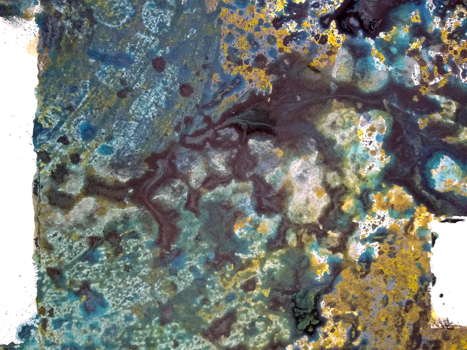 Bloom (Detail)