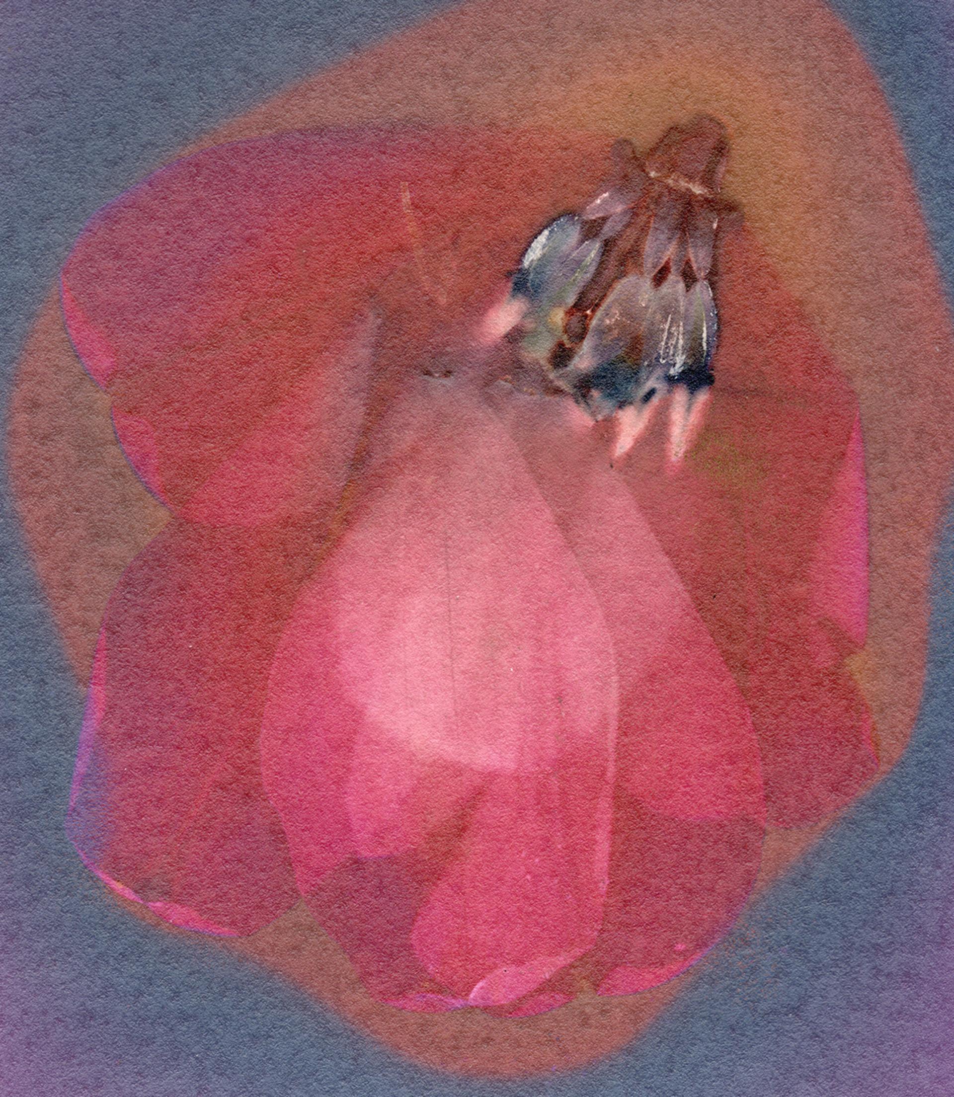 Tulip (2021)