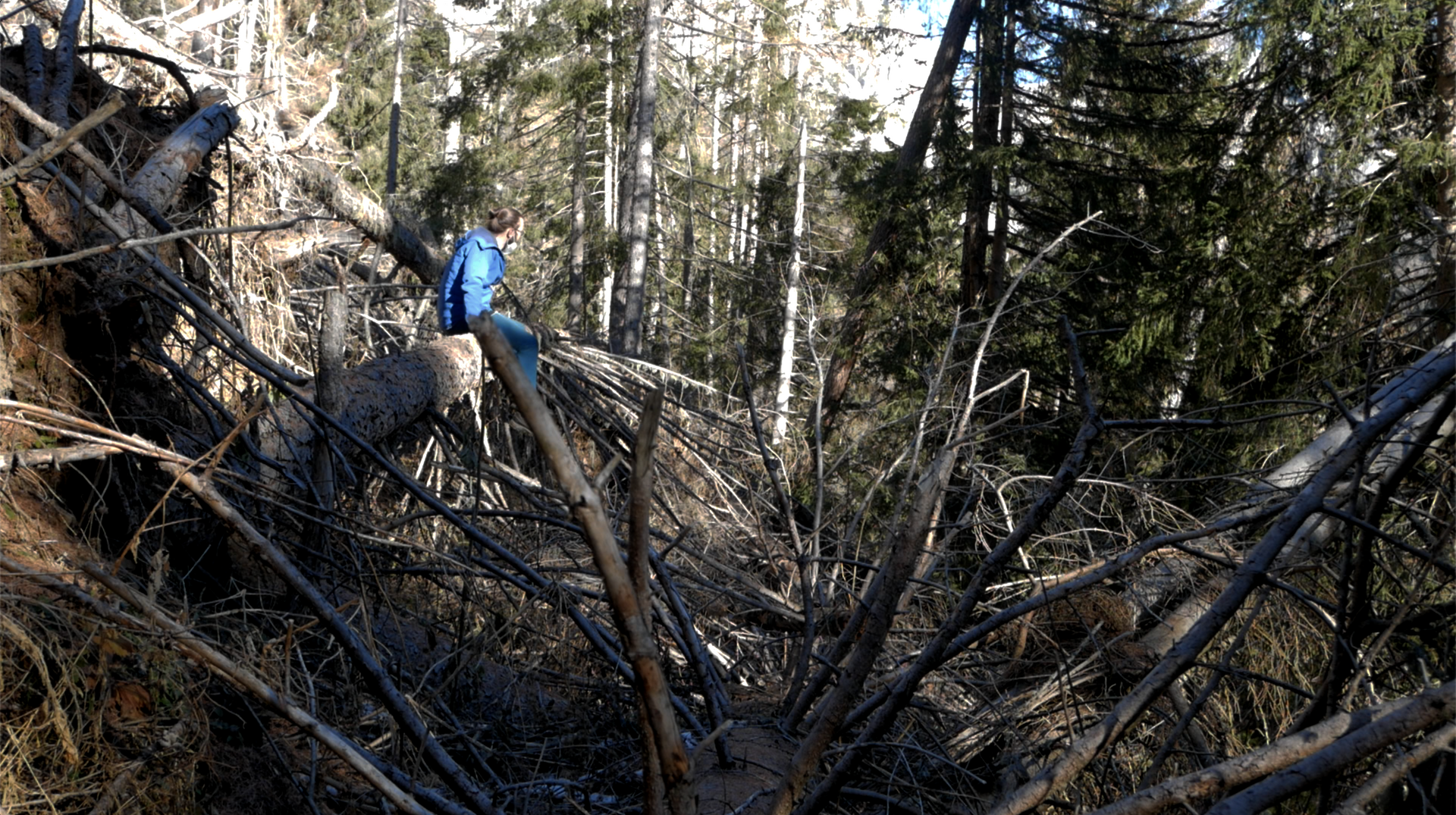 Exploring the felled forest