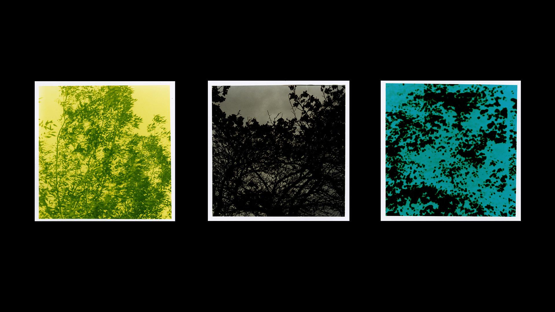 Colour + Film