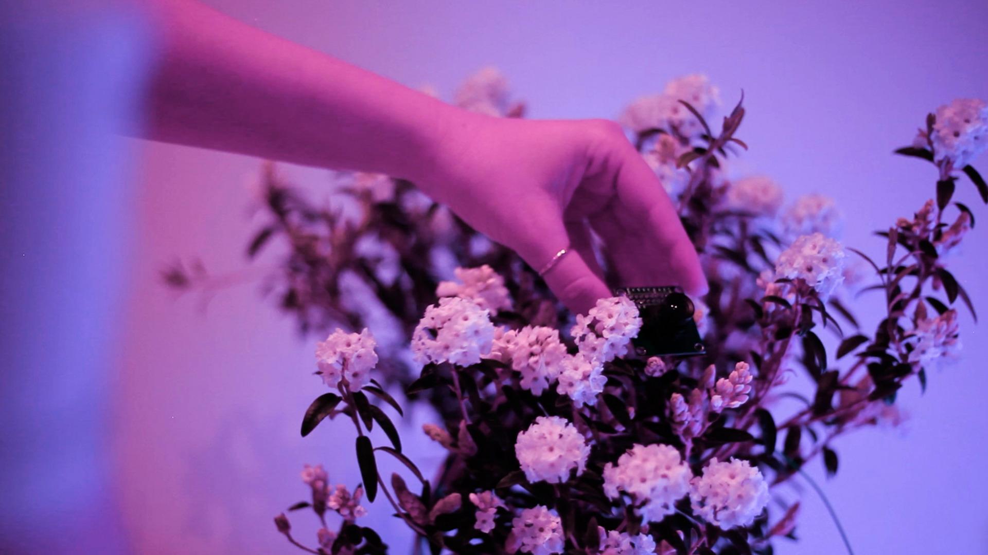 Plant-machine experimentation