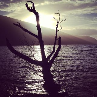 A tree silhouette in front of a loch
