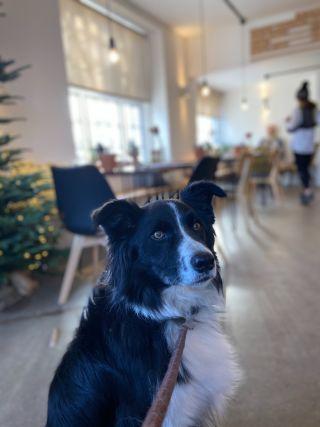Dog sat inside a coffee shop