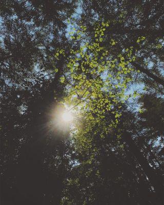 Sun shining through beach tree leaves