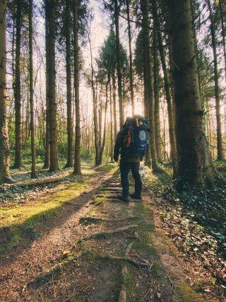 A man wearing a rucksack walking through a pine wood