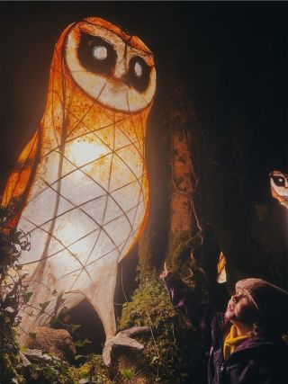 A little girl points to a huge illuminated owl in a dark wood