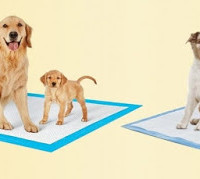 FREE_Petsworld_Dog_Training_Potty_Pads_Sample_dytulw
