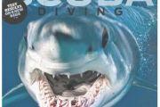 1a597d68fc064f137fe6c6e2221f3acd--free-magazines-scuba-diving-magazine_zllbnn