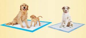 FREE_Petsworld_Dog_Training_Potty_Pads_Sample_dytulw