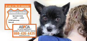 Pet-Safety-Pack_112116_form-banner-mobile-v2_euq4zd