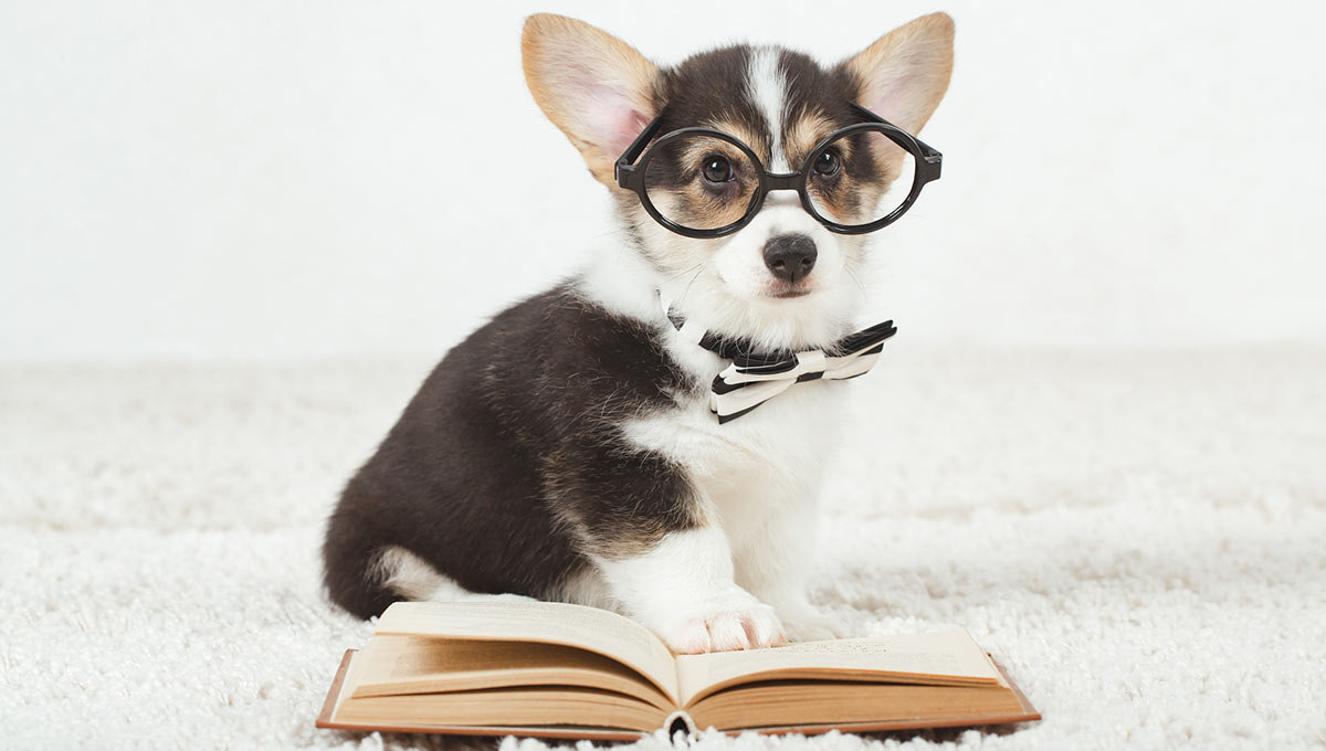 The Absolute Beginner's Guide to SpeedReading