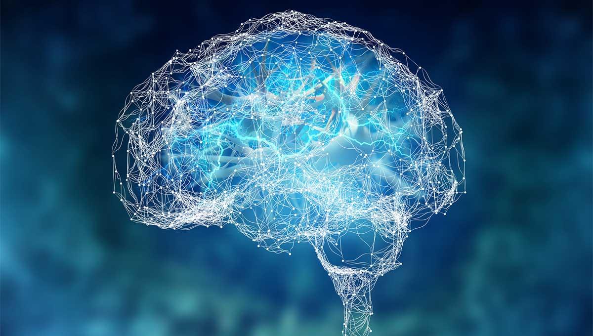 Словник термінів про мозок