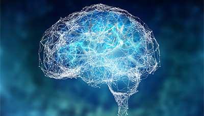 Glossary of Neuroscience Terms
