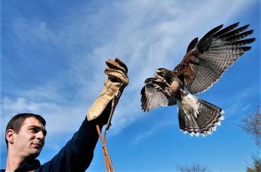 You'll have first-hand experience with spectacular birds of prey