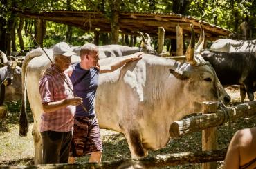 During a visit to an ecological family farm you will get to meet various farm animals, as well as indigenous Istrian oxen called Boškarin