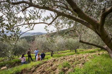 You will visit a local olive oil producer, who will tell you something about the estate, olives, olive oil and oil tasting techniques